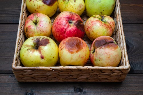Pourrissement des fruits